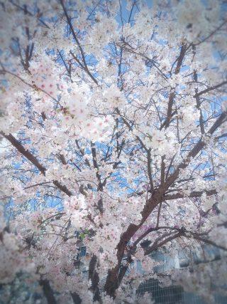 春の陽気🌸